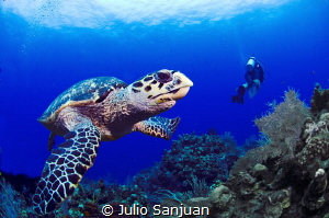 Turtle and diver by Julio Sanjuan